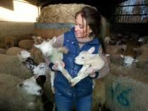 Giddyup catching lambs