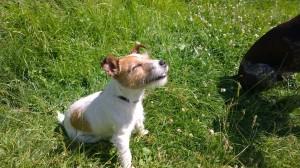 Dora sunbathing on Bramshill